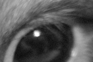 2004.09.07 PENTAX *istD / smcTAKUMAR 50mmF1.4